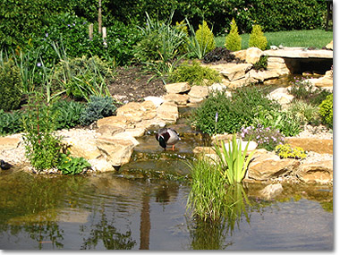 Pond with rockery